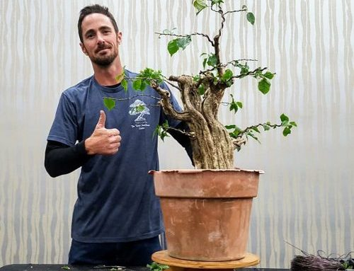 Instructor Mike Lane featured artist at 2018 Lonestar Bonsai Federation's Annual State Convention, TX